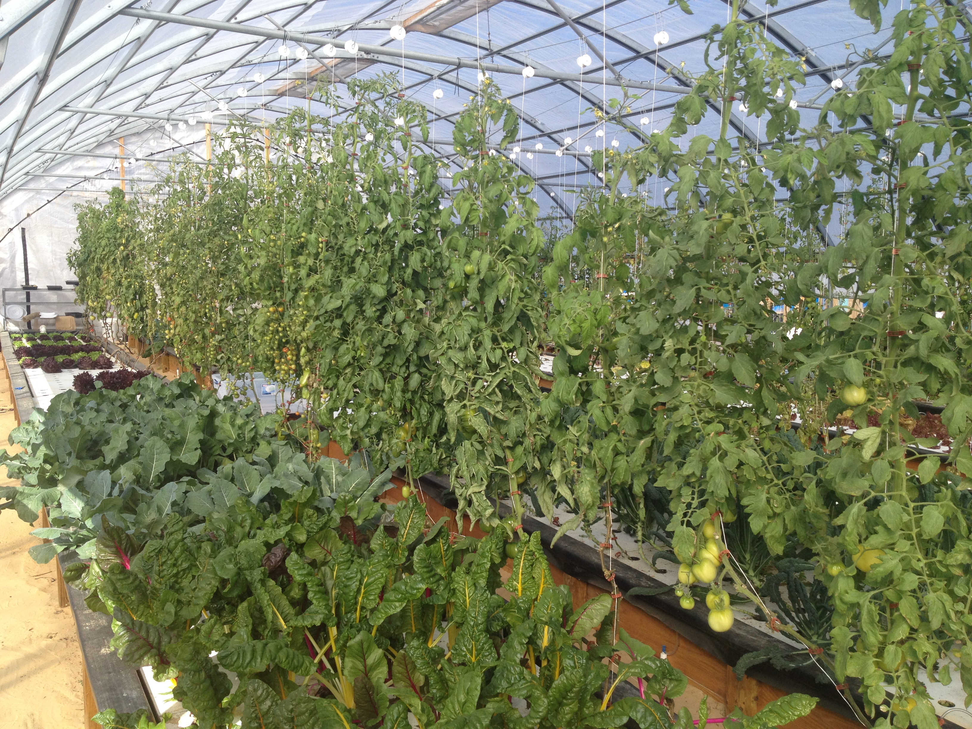 Home - College of Aquaponic Engineering & Design